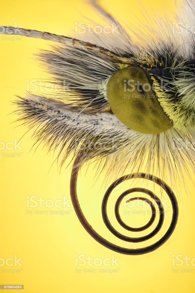 Extreme magnification - Anthocharis cardamine butterfly stock photo