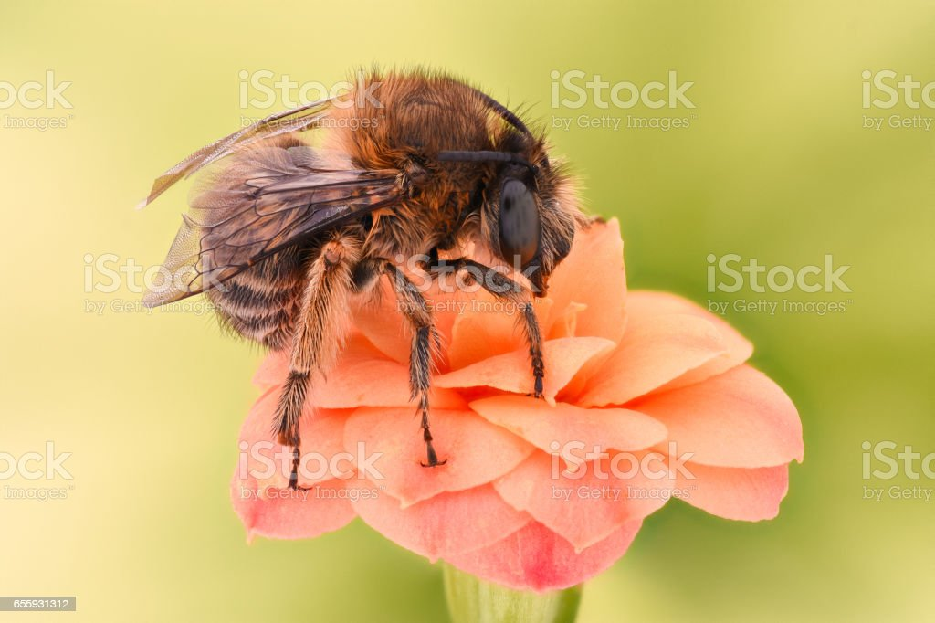 Extreme magnification - Bee pollinating flower stock photo