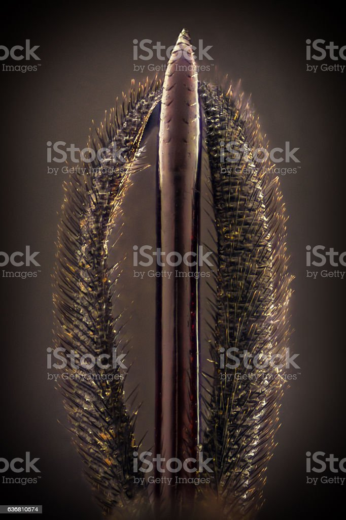 Extreme magnification - Black wasp stinger details stock photo