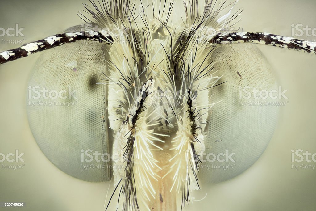 Extreme magnification - Butterfly head, front view stock photo