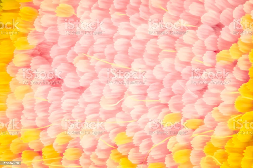 Extreme magnification - Butterfly wing scales stock photo