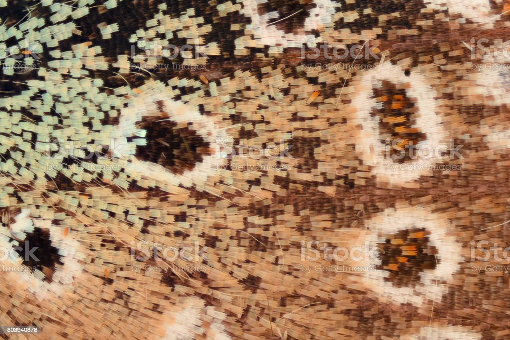 Extreme magnification - Butterfly wing scales under the microscope stock photo