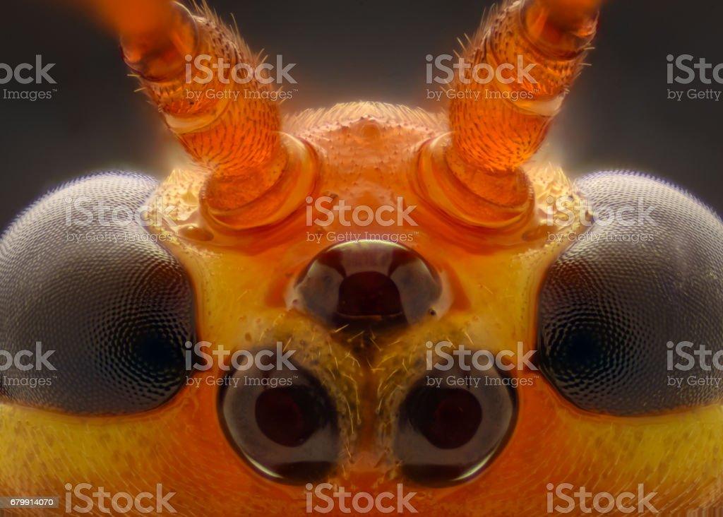 Extreme magnification - Cremastinae wasp stock photo