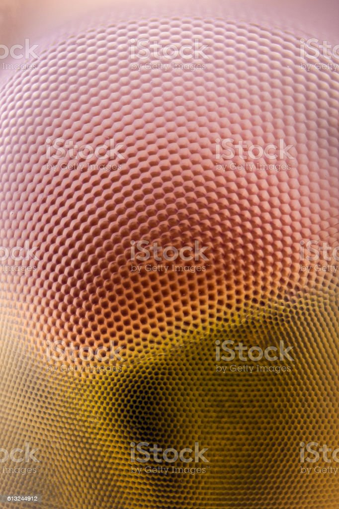 Extreme magnification - Dragonfly compound eye texture stock photo