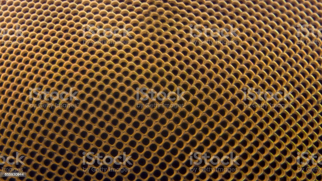 Extreme magnification - Fly eye at 20x stock photo