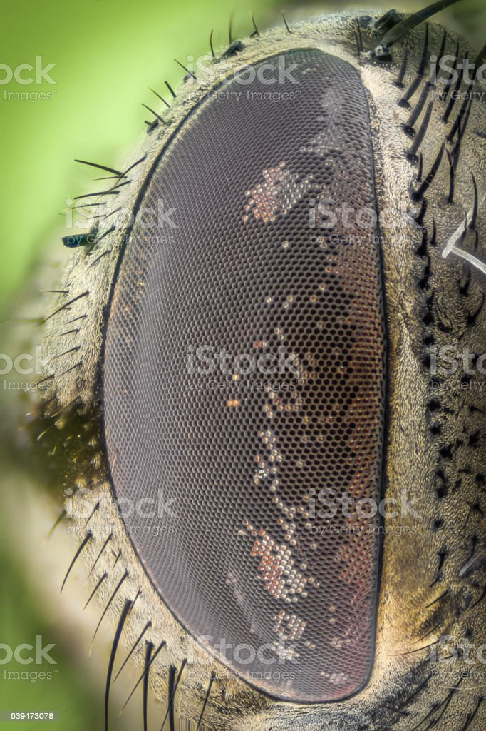 Extreme magnification - Fly eye, side view stock photo