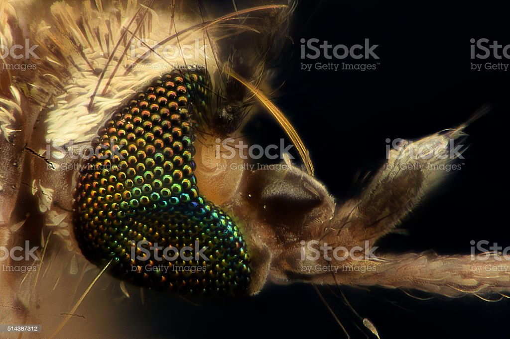 Extreme magnification - Mosquito head, side view stock photo