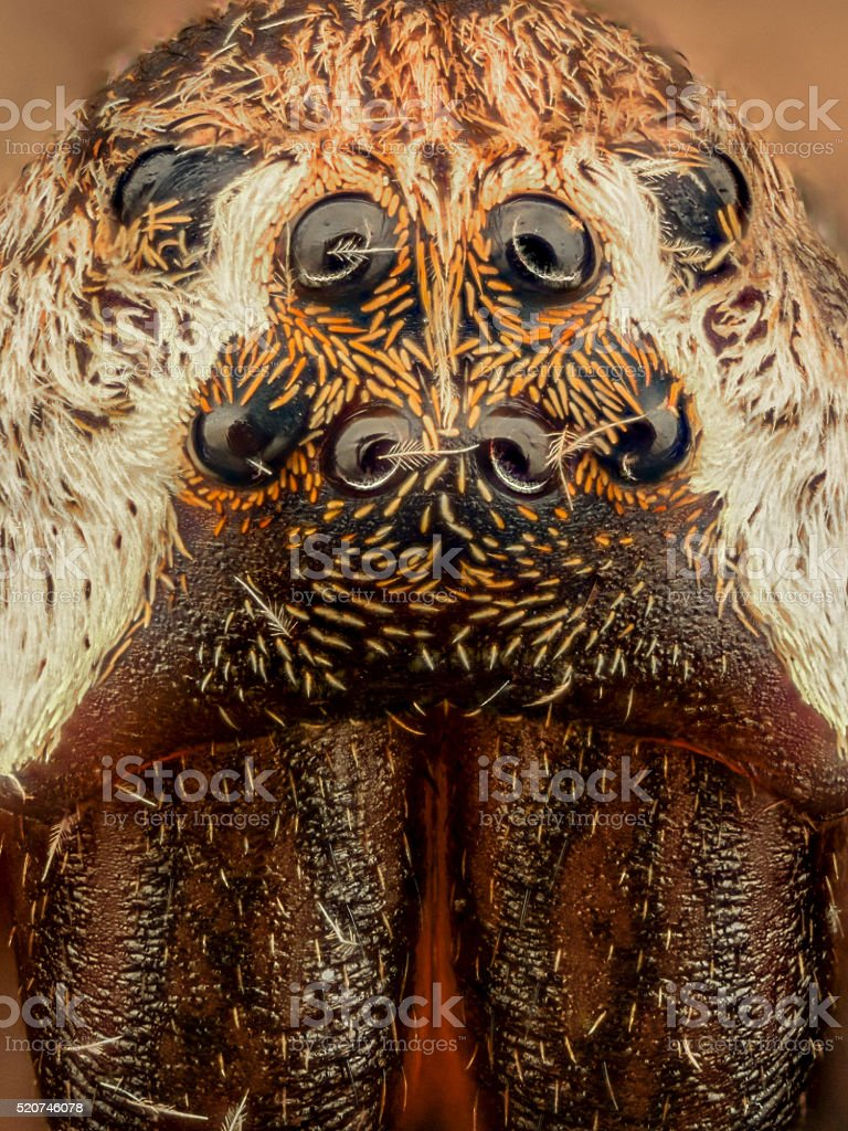 Extreme magnification - Spider eyes, front view, arrangement stock photo