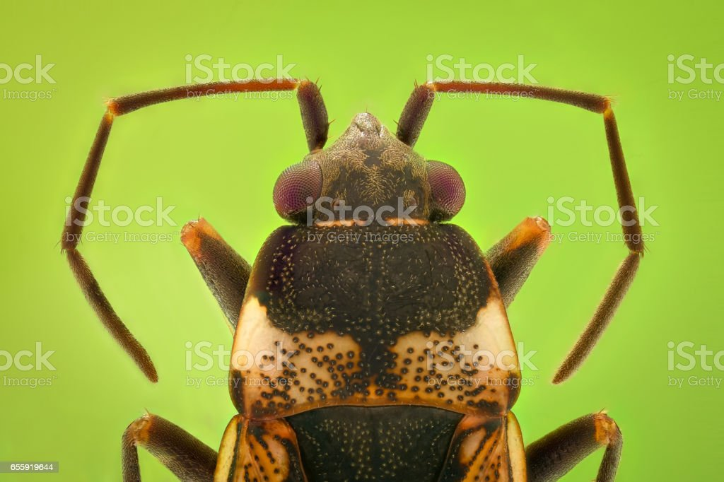 Extreme magnification - Top view of a small bug stock photo