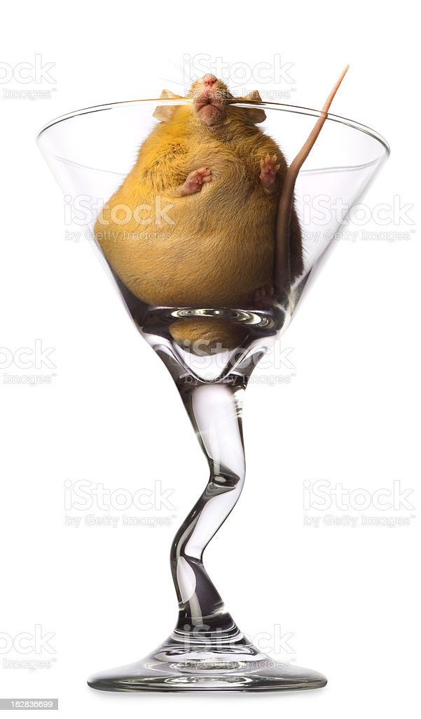 Extremely Over Weight Mouse Stuck in Martini Glass royalty-free stock photo