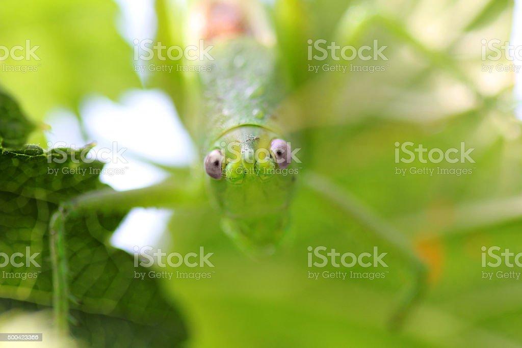 Eye locust stock photo