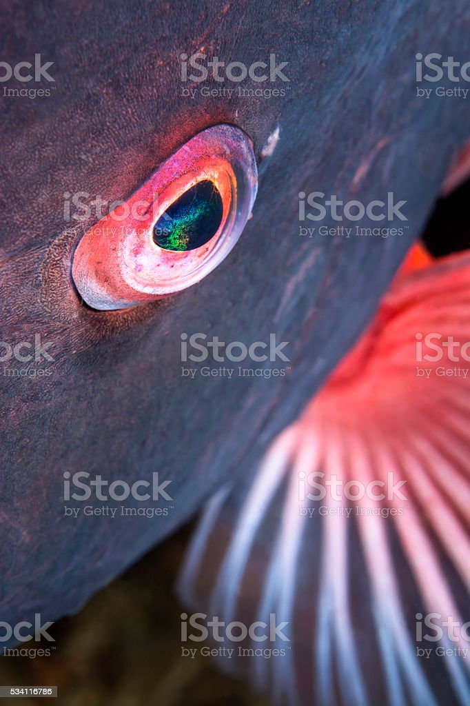 Eye of a colorful fish stock photo