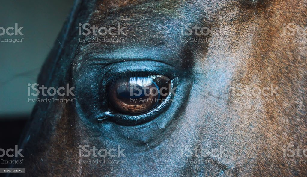 Eye of a horse on a dark background stock photo