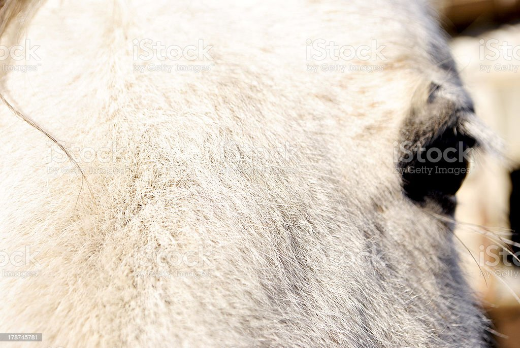 eye of a horse stock photo