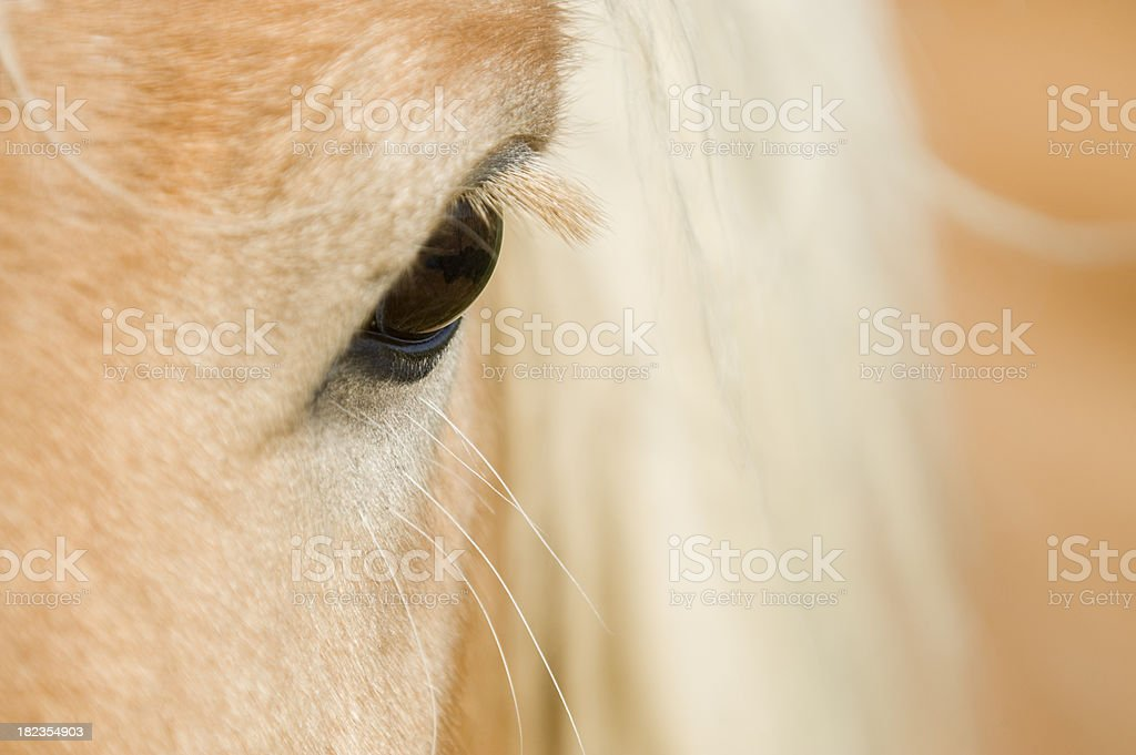 Eye of a horse royalty-free stock photo