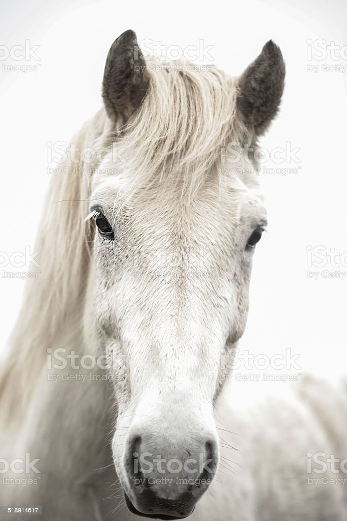 Eye of a Horse stock photo