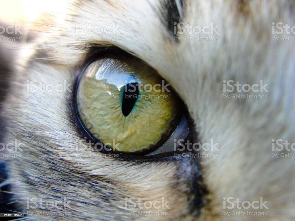 Eye of domestic cat stock photo