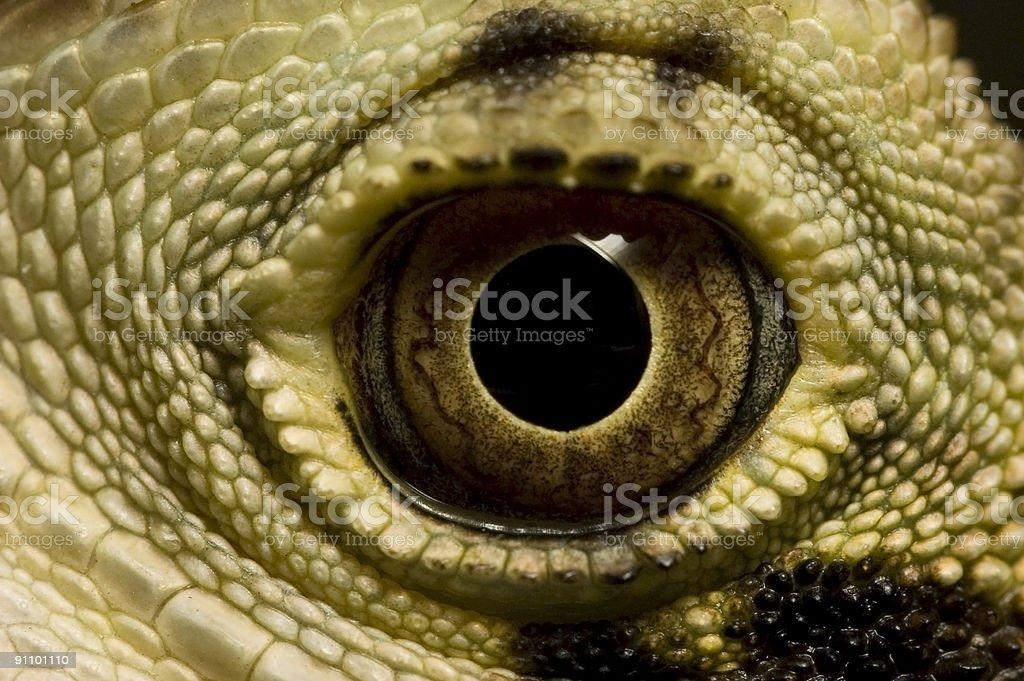 Eye of The Dragon royalty-free stock photo