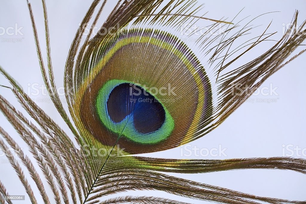 Eye of the peacock feather stock photo