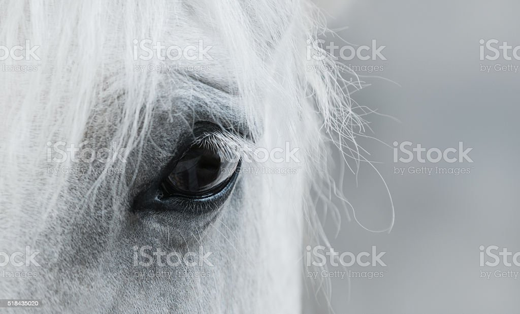 Eye of white mustang stock photo