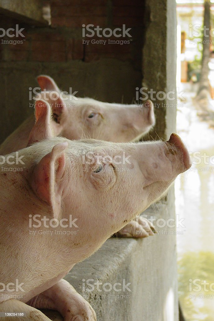 Eye on Piggy stock photo
