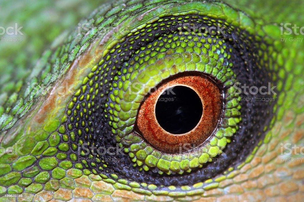 Eye. stock photo