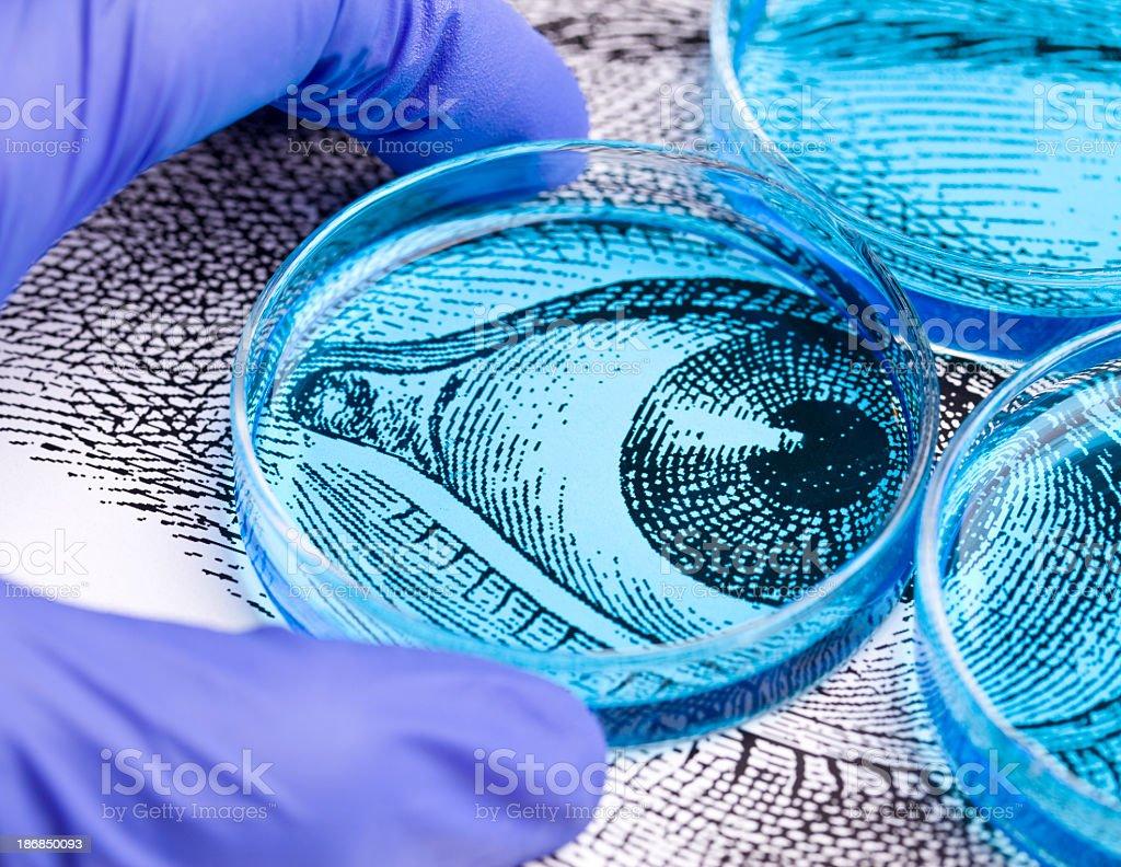 Eye Research royalty-free stock photo