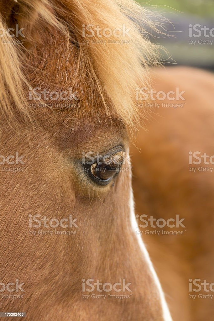 Eye to the soul. royalty-free stock photo