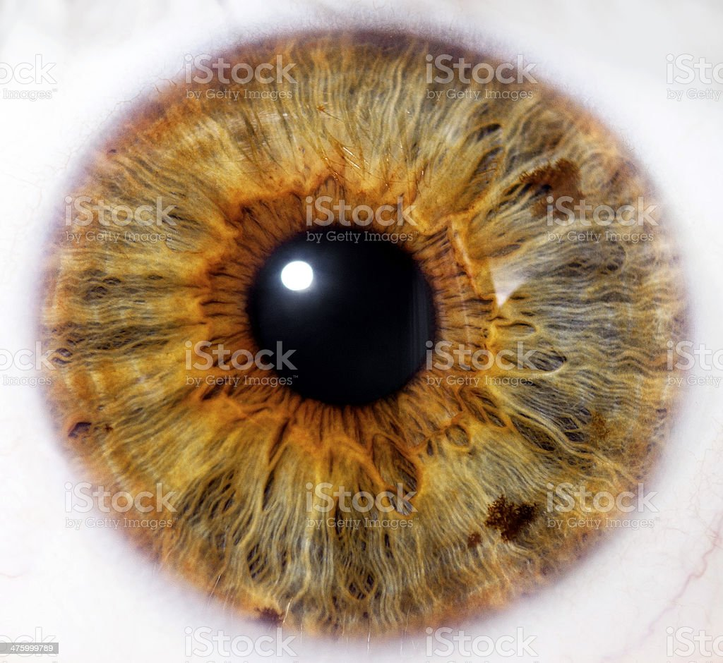 Eyeball - close up stock photo