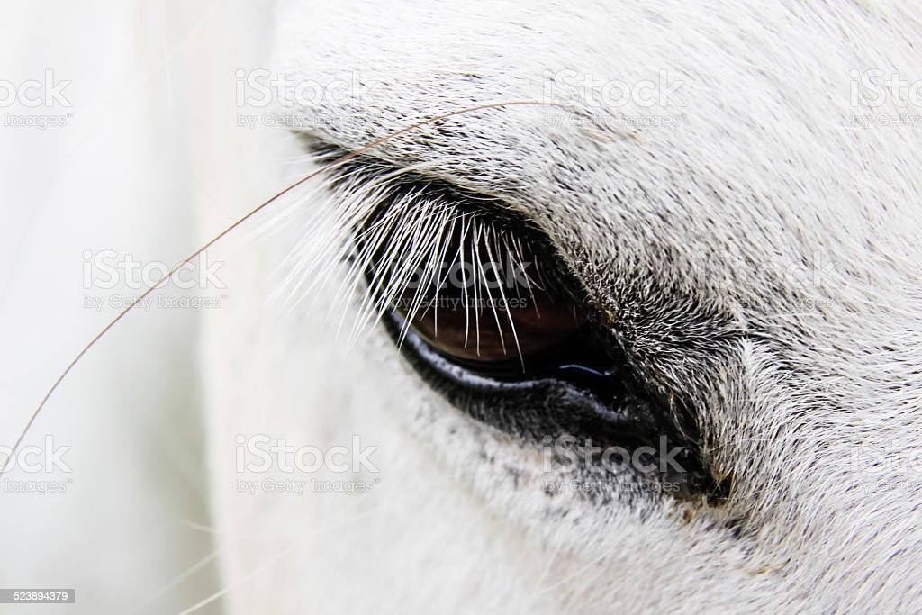 Eyelash of a white horse. stock photo