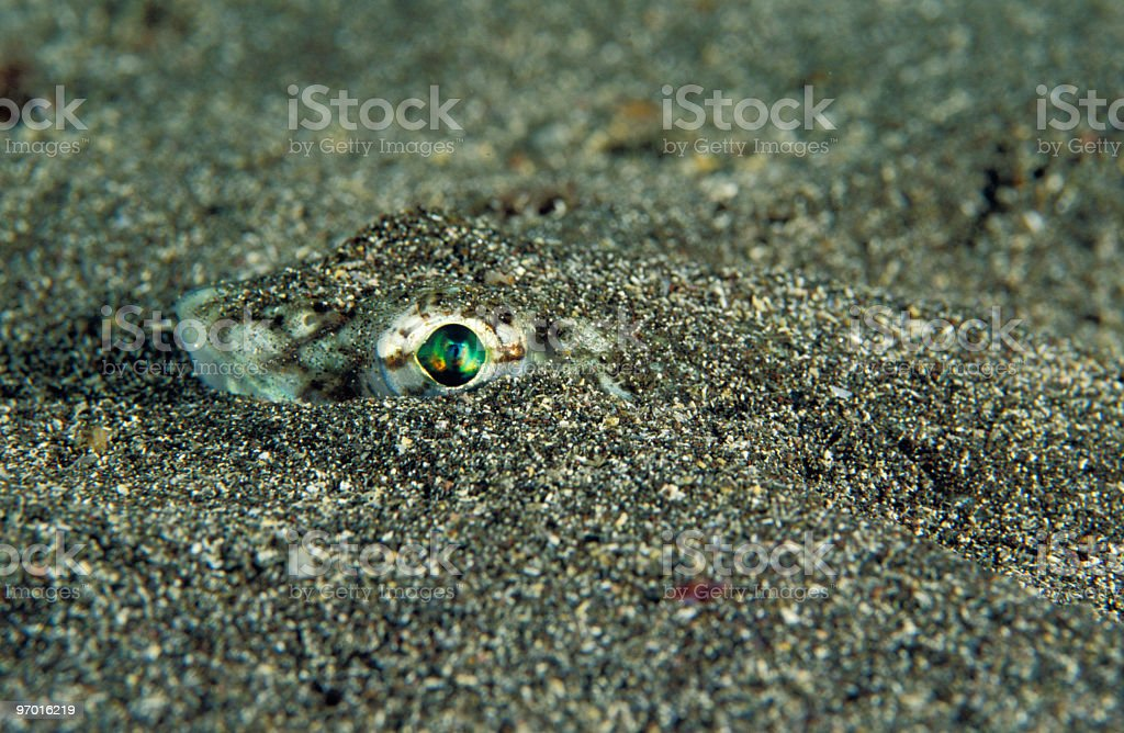 Eyes from the sand royalty-free stock photo