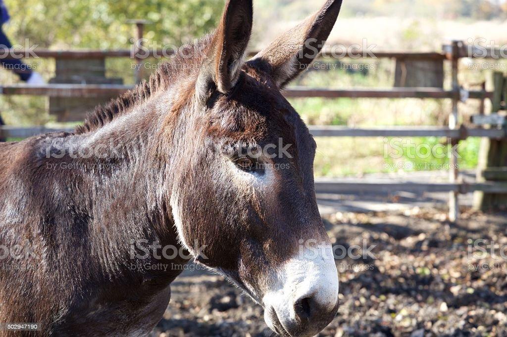 Eyes of a donkey stock photo