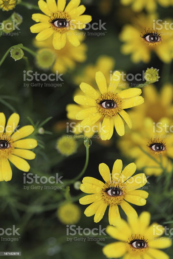 Eyes of flower royalty-free stock photo