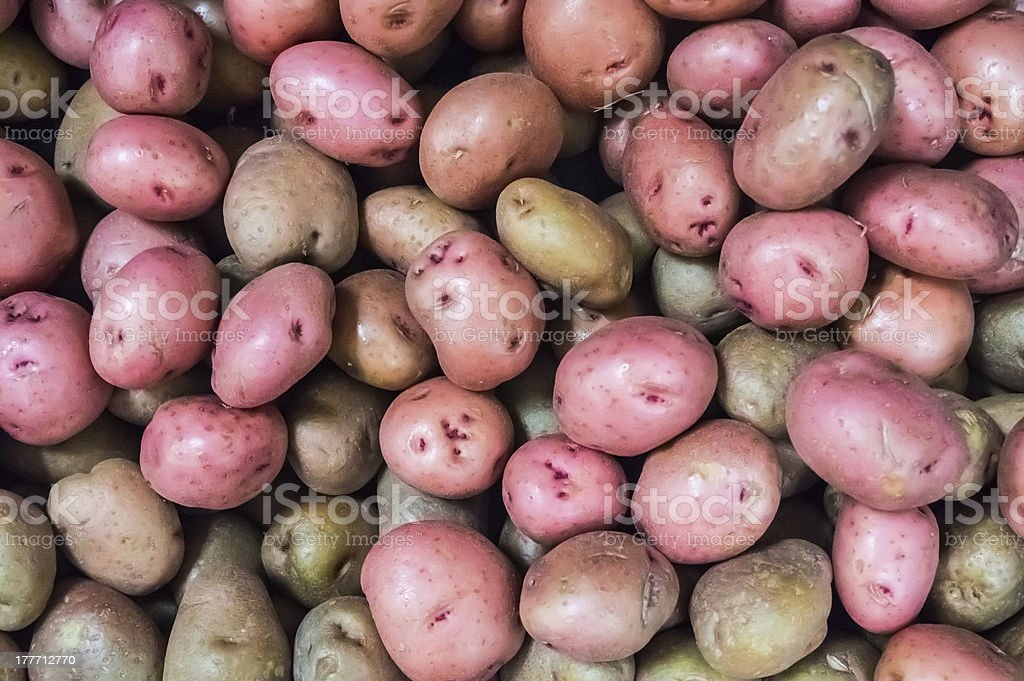 Eyes on Red Potatoes royalty-free stock photo