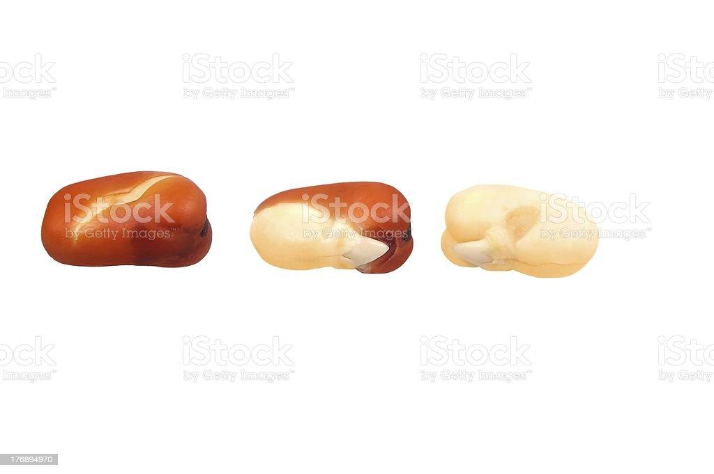 faba or fava beans royalty-free stock photo