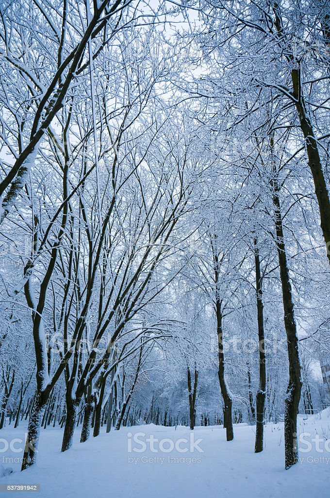 Fabulous evening winter background with snowbound alley stock photo