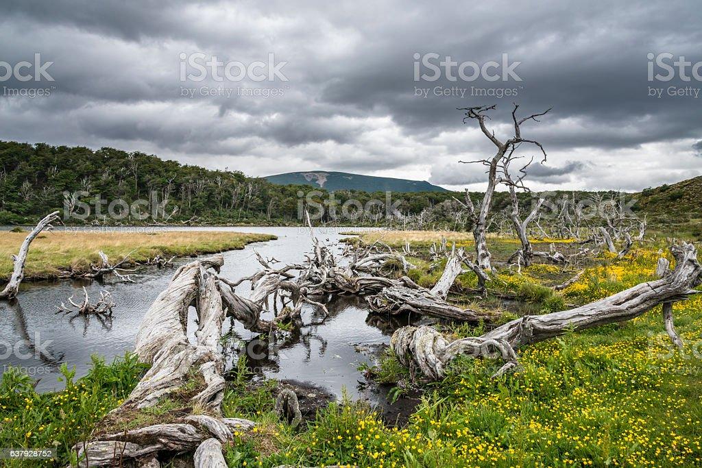 Fabulous summer landscape in Tierra del Fuego National Park stock photo