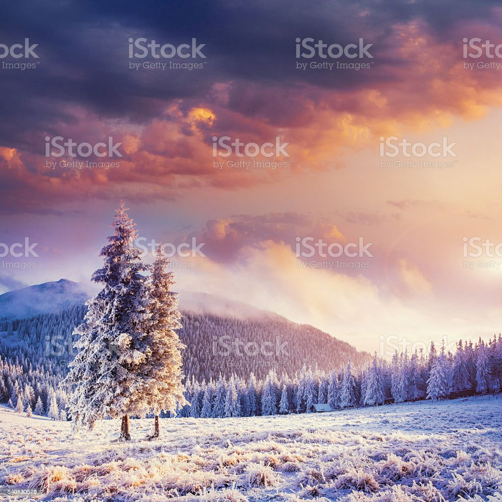 Fabulous winter landscape in the mountains stock photo