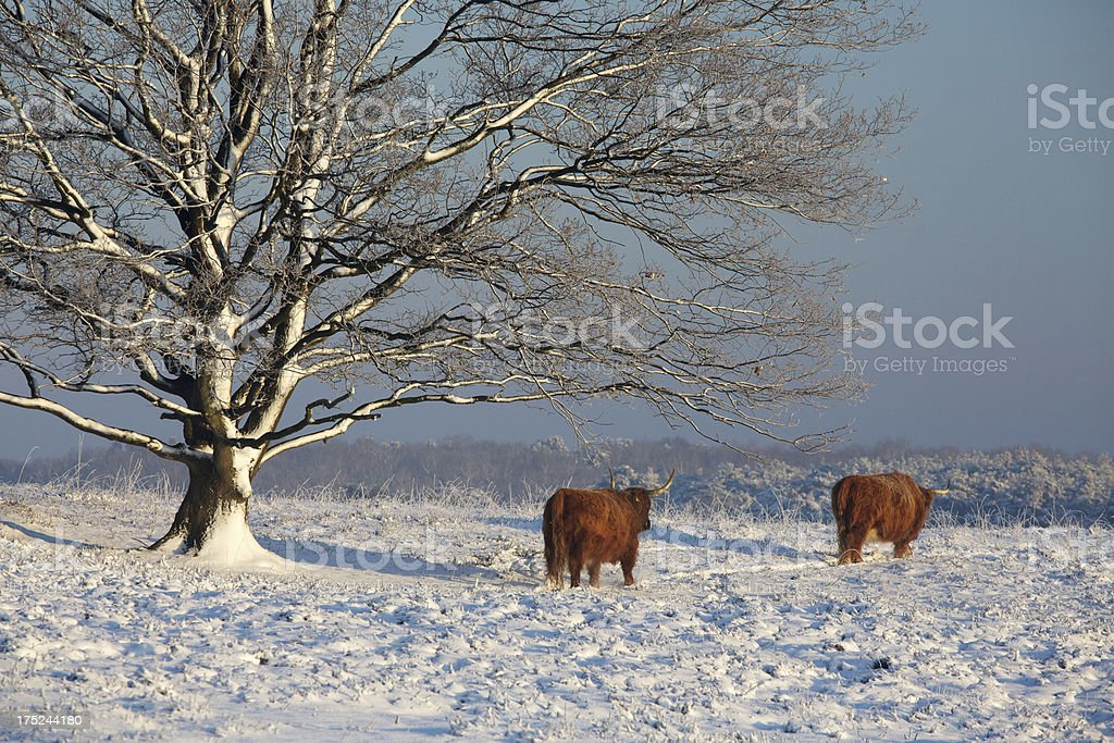 Fabulous winter time royalty-free stock photo