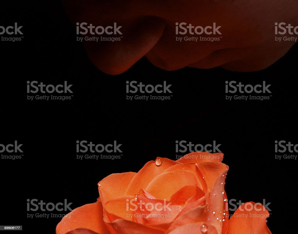Face above rose royalty-free stock photo