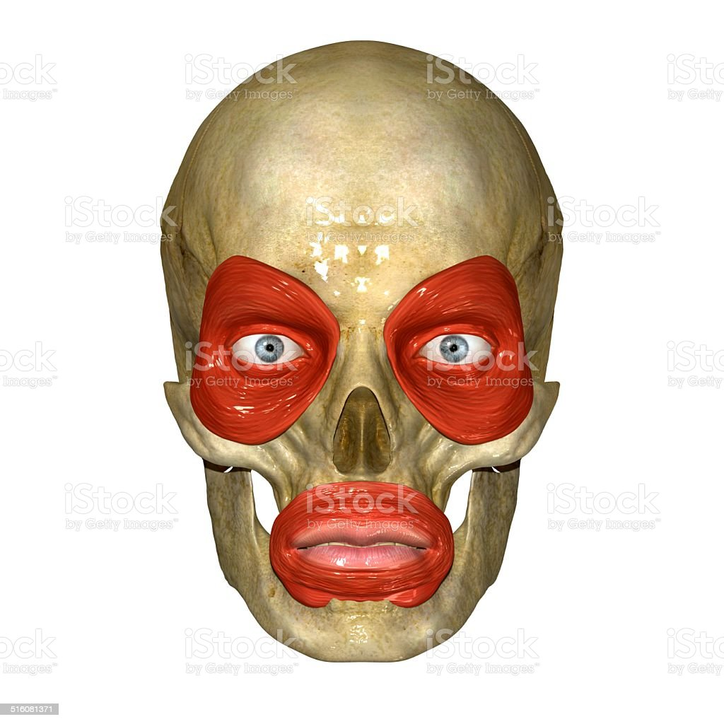 Face muscles stock photo