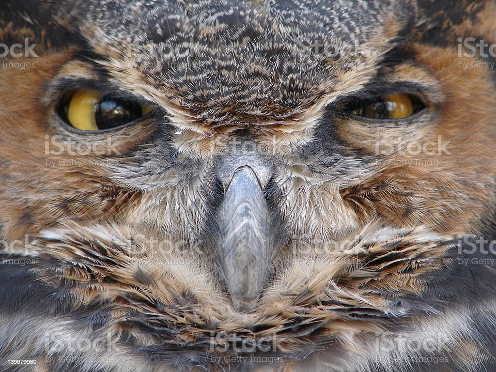Face of an Owl royalty-free stock photo