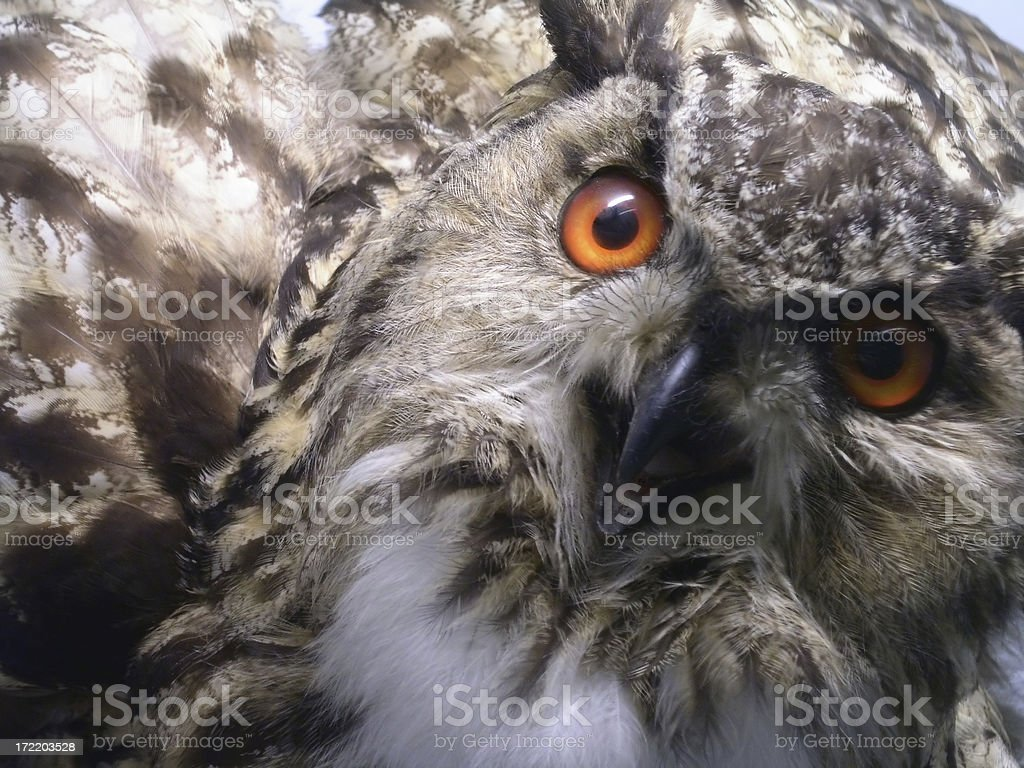 Face Off royalty-free stock photo