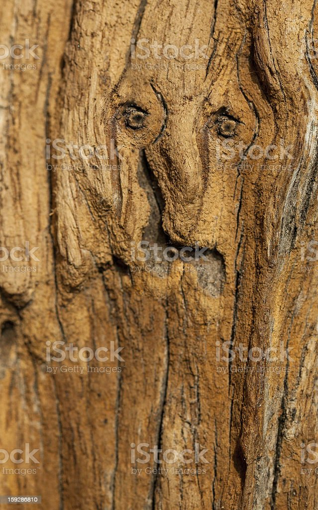 Face patern in old oak wood royalty-free stock photo