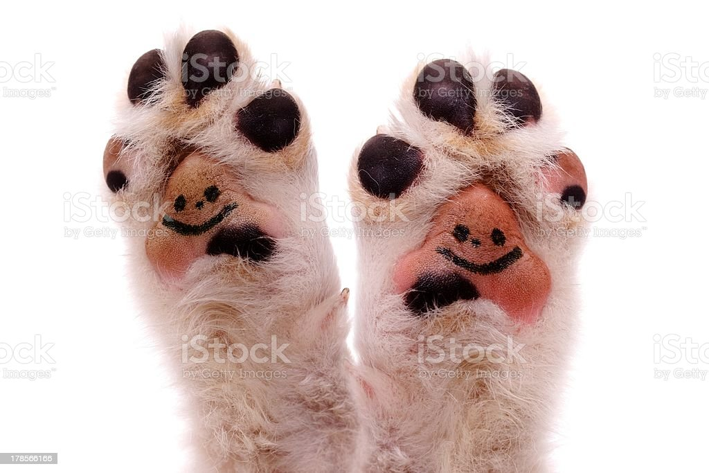 face paws stock photo