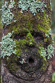 Face shape on tree