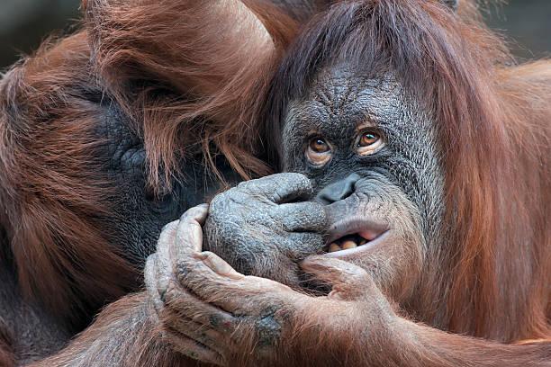 Opinion Two monkeys having sex