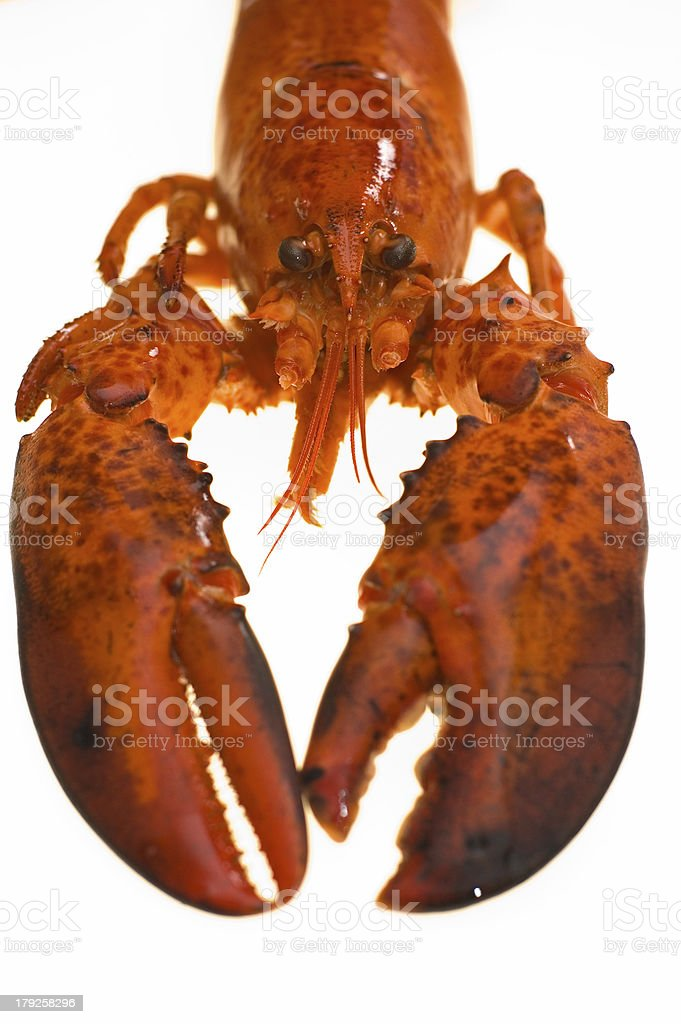 Facing a cooked lobster. Hmmm, delicous. stock photo