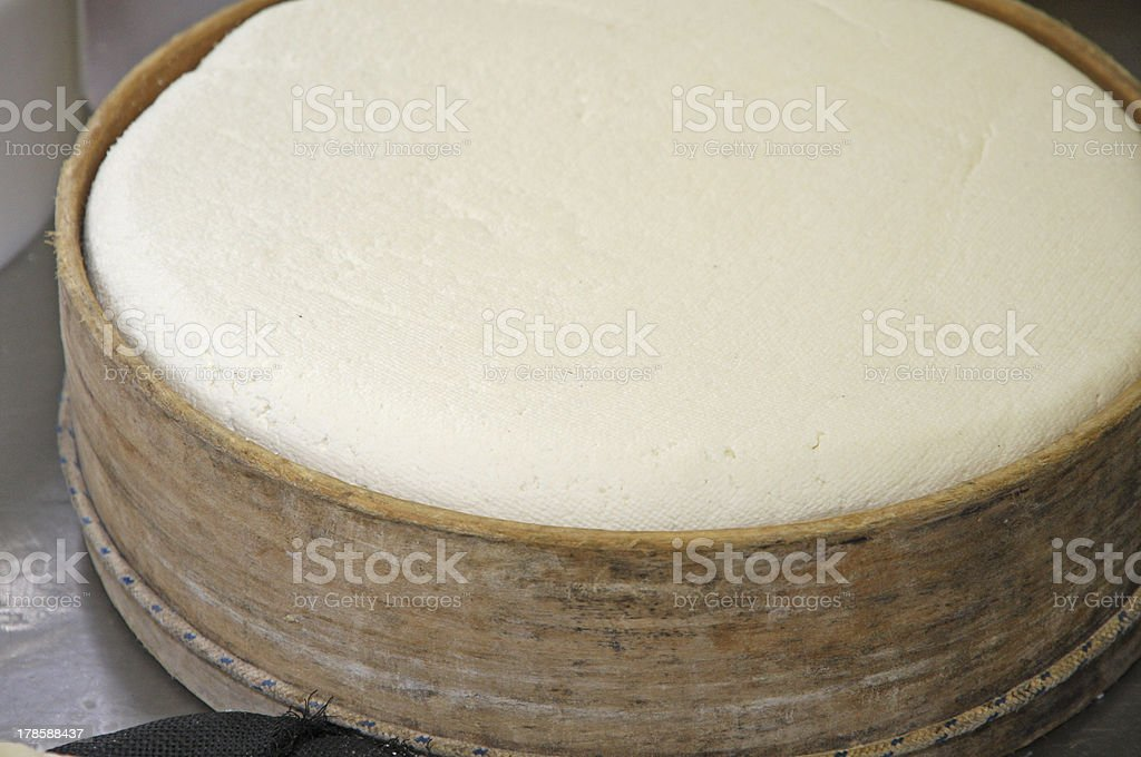 factory for the production of cheese and fresh caciotta stock photo