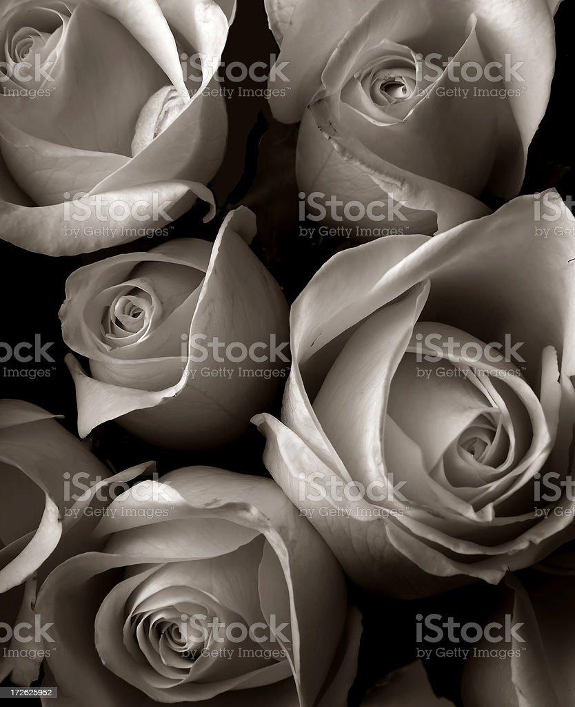 faded roses royalty-free stock photo